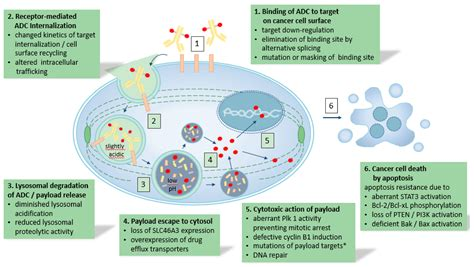 Cancers | Free Full-Text | Acquired Resistance to Antibody