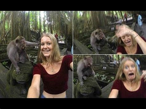 Who's a cheeky monkey?Tourist's selfie  horribly wrong as
