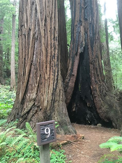 Day Trip to Muir Woods National Monument by Bus from San
