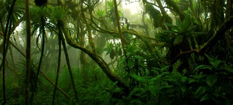 Top 10 Amazing Jungles in the World | FactRetriever