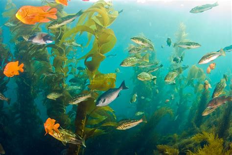 Diving Catalina Island Underwater Photography Guide